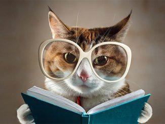 Кошка учится